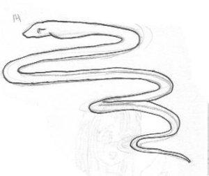 snake14